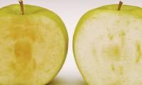 アメリカで初の切り口が茶色くならないリンゴ