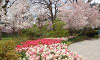 春の花、4月9日(日)まで、ダラス植物園にて
